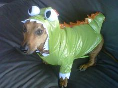 Dog Costume Ideas #Costumecontest #BigDot #HappyDot