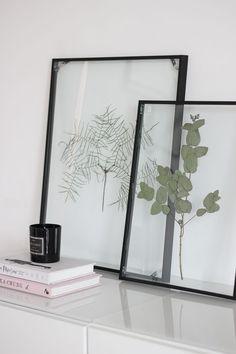DIY: Floating Frame Herbarium - so bastelt ihr den schwebenden Rahmen!