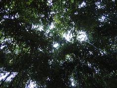 bosque de bambú Plants, Woods, Impressionism, Flora, Plant, Planting
