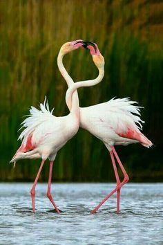 love is beautiful!!!!!!!...