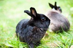 Czacza i Rumba, dwie króliczki do adopcji/ Rabbits, Animals, Animales, Animaux, Bunny, Rabbit, Bunnies, Animal, Animais
