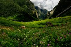 The Valley of Flowers is accessible only in the summer, between June and October. The rest of the year, heavy snows make passage impossible, and usually block off the trail leading up to the National Park.