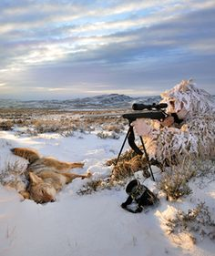 We explain coyote rut behavior and give you hunting tips from the pros. Bow Hunting Tips, Hunting Girls, Hunting Stuff, Predator Hunting, Coyote Hunting, Coyote Trapping, Turkey Hunting Season, Varmint Hunting, Outdoor Life