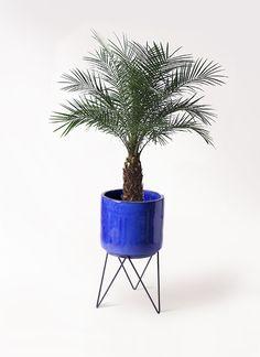 観葉植物 フェニックスロベレニー 8号 ビトロ エンデカ 鉢カバースタンド付 ブルー 付き