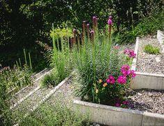 Erst durch die passende Bepflanzung wird der Kiesgarten zum Lebensraum.