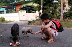 The little boy who took it upon himself to feed stray dogs every day.