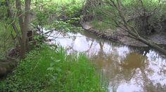 Релаксация. Звуки Птиц и Воды (Peace. Relax. Nature Sounds) (+плейлист)