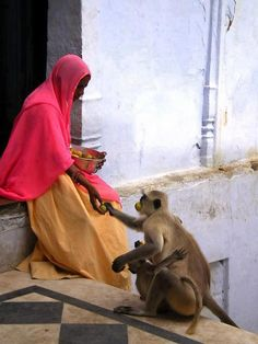 A monkey comes to visit and gets refreshment