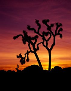 Sunset at Joshua Tree NP, California... beautiful place! -I want to turn this into a quilt.