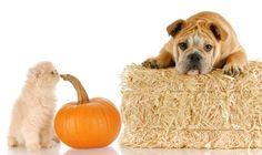 Easy DIY Halloween Treats | Pet Paradise