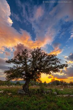 ~~The Tree ~ dramatic sunset, Greece by Stelios Kritikakis~~