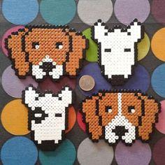 Instagram photo by La Eire Gata (Irene Garcia) (@laeiregata) 13/01/2015 HamAnimals! Beagle Bicolor/Bicolor Raya Bull Terrier Parche/Blanco www.mascotart.com
