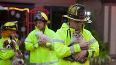 Saving #Cats and #Dogs ...all in a days work for these fireman