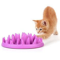 Dougez Pet Cat Catch Interactive Feeder Slow Food Feed Bowl *** For more information, visit image affiliate link Amazon.com