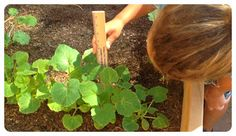 Fit Kids Clubhouse: Clubhouse Garden Math: Common Core in the Dirt