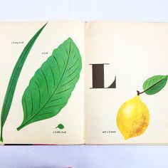 englishmodernism: L for Leaf and a Lemon. Bruno Munari. Spread from his 1960 ABC book