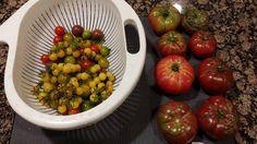 Tomato Rainbow #gardening #garden #gardens #DIY #landscaping #home #horticulture #flowers #gardenchat #roses #nature