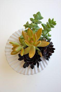 Offset Succulent Garden