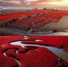 China Panjin Red Beach
