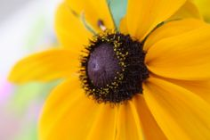Yellow Flower Close-Up Photo - National Geographic Kids My Shot
