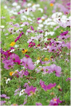 The perfect country meadow #gardens #flowers