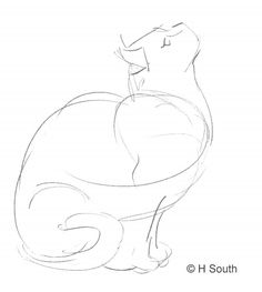 Your Guide to Drawing and Sketching Cats