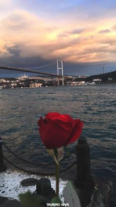 Search free wallpapers, ringtones and notifications on Zedge and personalize your phone to suit you. Istanbul City, Istanbul Travel, Islamic Wallpaper, Rose Wallpaper, Aesthetic Backgrounds, Aesthetic Wallpapers, Turkey Photos, Snapchat Picture, Pretty Wallpapers