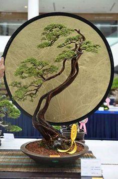 Best Bonsai Planter Ideas For Your Interior Design 80 Mini Bonsai, Indoor Bonsai, Bonsai Plants, Bonsai Garden, Ikebana, Bonsai Styles, Miniature Trees, Tree Forest, Tree Art