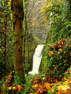 Multnomah Falls along the Colombia River - Oregon  #landscape #multnomah #falls #colombia #river #oregon #photography