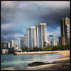 Hawaiian Monk Seal – love these guys.  The Hawaiian monk seal, Monachus schauinslandi, is an endangered species of earless seal in the Phocidae family that is endemic to the Hawaiian Islands.  The Hawaiian monk seal is the only seal native to Hawaii.