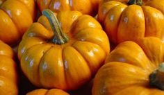 Where to find tinned (canned) pumpkin in the UK.