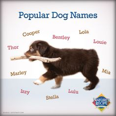 Alcohol Names For Girl Dogs