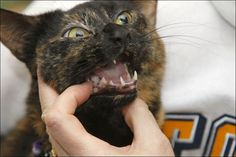Pet owners often overlook problems in oral care.