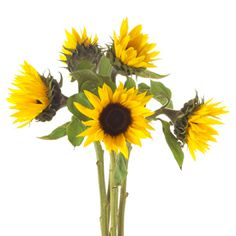 Petite Sunflowers $133.30 for 100, Free shipping without minimum order GROWER'S BOX.COM
