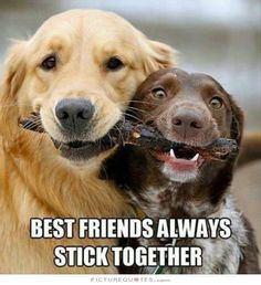 Best friends always stick together. Picture Quotes.