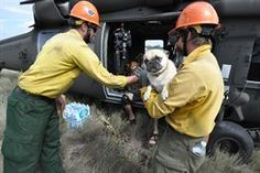 Civilian rescue personnel help a flood evacuee and a pug exit a U.S. Army UH-60 Black Hawk helicopter assigned to the 2nd Battalion, 135th A...