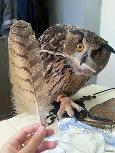 Uhu - Eurasian Eagle Owl by Nika ZUBRA