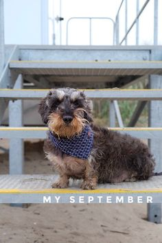 My September, co-starring 👨🏻 and Uncle Bracken, on @stellerstories