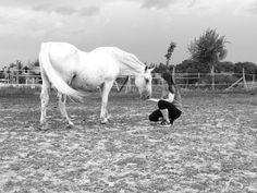 Photo Reference, Horses, Animals, Animales, Animaux, Animal, Animais, Horse