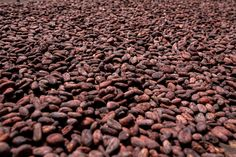 You have to leave the beans to ferment to develop the typical chocolate flavor. The fermentation usually lasts about five days and some farmers will mix the beans on the second or third day. Cacao Beans, How To Make Chocolate, Chocolate Flavors, Superfoods, Farmers, Dog Food Recipes, Third, Super Foods, Dog Recipes