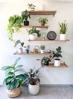 Creative Succulent Decoration Ideas For Your Living Room - Today, stress and tension has become a way of life. The moment you get out of your house to go to work, you prepare yourself for the pressures the wor. Bedroom Plants Decor, House Plants Decor, Room Ideas Bedroom, Teen Room Decor, Plant Decor, Indoor Plant Shelves, Indoor Plant Wall, Indoor Plants, Plants On Shelves