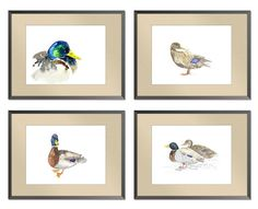 SALE 20 SET of four Art  Duck Watercolor Paintings by EvaForest, $51.20