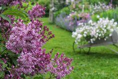 http://warrengrovegarden.blogspot.com/2014/03/summer-garden-favorites.html