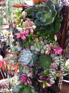Terra Sol Garden Center - Succulents