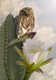 Owl And Peruvian Apple Cactus - I.M.Spadecaller