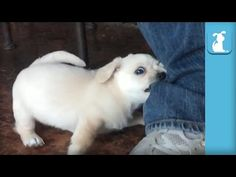Gorgeous Shelter Pup Goes Crazy For Human's Pant Leg | The Animal Rescue Site Blog