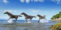 El artista James Doran Webb crea increíbles esculturas de animales utilizando solamente trozos de madera que encuentra en las costas del mar o en las riberas. Todo-Mail
