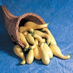 Squash Horn of Plenty Hybrid in The Big Seed Book from Park Seed on shop.CatalogSpree.com, my personal digital mall.