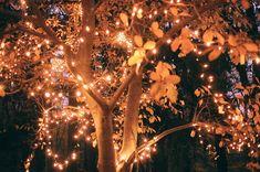 i love lights in trees