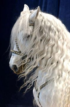 "Friesian horses also have a long, thick mane and tail, often wavy, and ""feathers… - Modern All The Pretty Horses, Beautiful Horses, Animals Beautiful, Cute Animals, Beautiful Beautiful, Lippizaner, Majestic Horse, White Horses, White Horse Images"